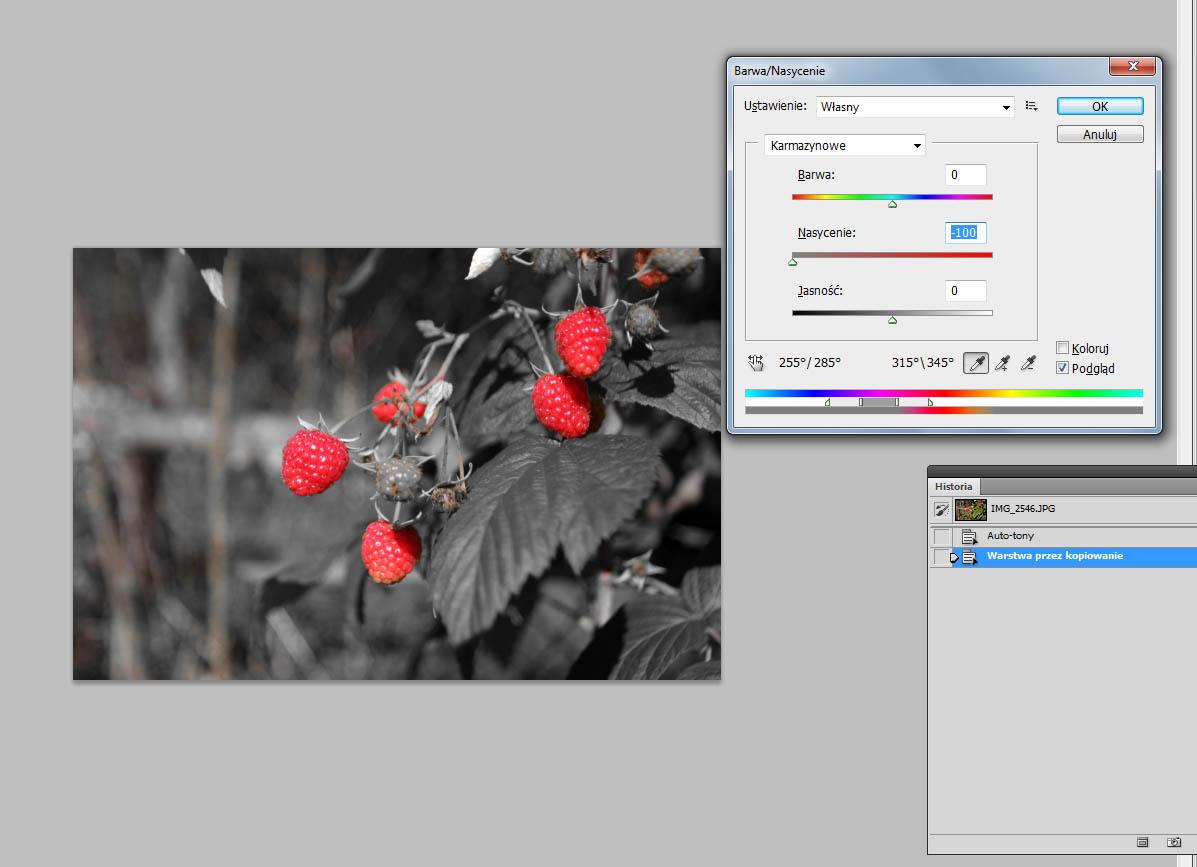 jeden kolor na fotografii